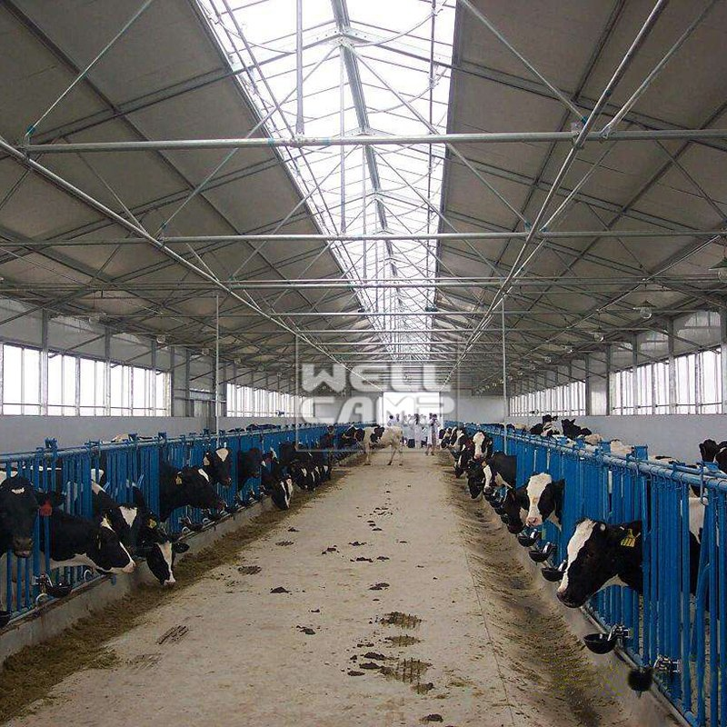 WELLCAMP Steel Structure for Pouitry Dairy Cow Shed and Chicken Farm Building -W06 Steel Structure image33